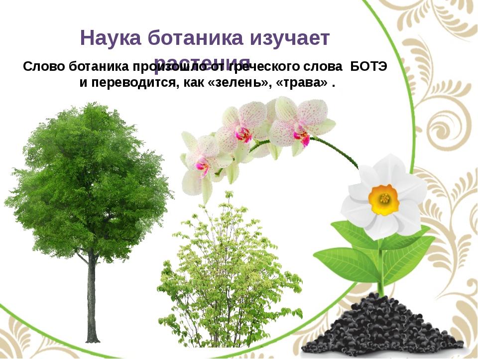 Наука ботаника изучает растения Слово ботаника произошло от греческого слова...