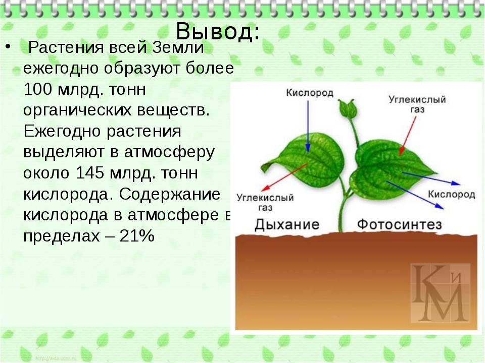 Вывод: Растения всей Земли ежегодно образуют более 100 млрд. тонн органическ...