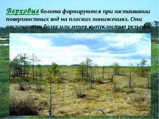 Верховые болота формируются при застаивании поверхностных вод на плоских пони