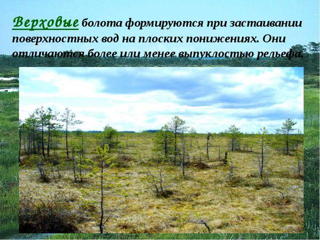 Верховые болота формируются при застаивании поверхностных вод на плоских пони...