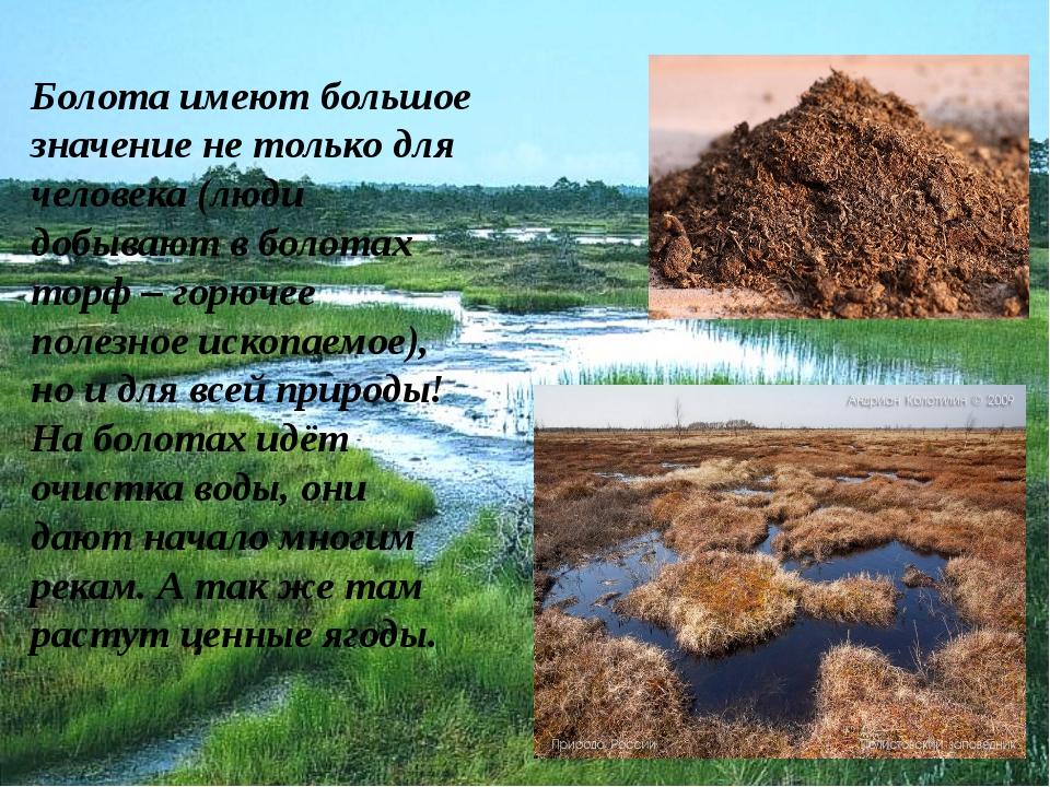 Болота имеют большое значение не только для человека (люди добывают в болотах...