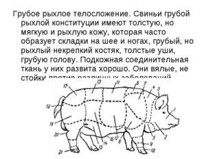 Грубое рыхлое телосложение. Свиньи грубой рыхлой конституции имеют толстую, н