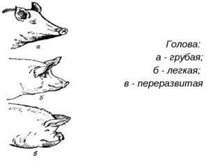 Голова: а - грубая; б - легкая; в - переразвитая
