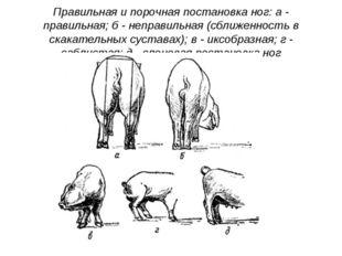 Правильная и порочная постановка ног: а - правильная; б - неправильная (сближ