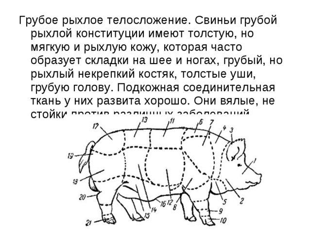 Грубое рыхлое телосложение. Свиньи грубой рыхлой конституции имеют толстую, н...