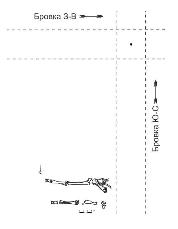 C:\Users\Fora\Desktop\чертежи\Проверенные\Без названия, кости животного.jpg