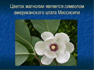 Цветок магнолии является символом американского штата Миссисипи