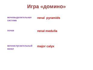 Игра «домино» мочевыделительная система renal pyramids почки renal medulla