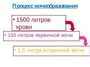 Процесс мочеобразования 1500 литров крови 150 литров первичной мочи 1,5 литра