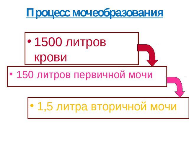 Процесс мочеобразования 1500 литров крови 150 литров первичной мочи 1,5 литра...