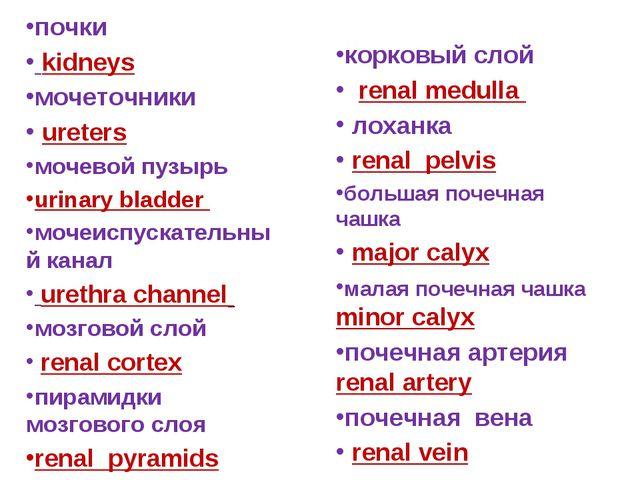 почки kidneys мочеточники ureters мочевой пузырь urinary bladder мочеиспускат...