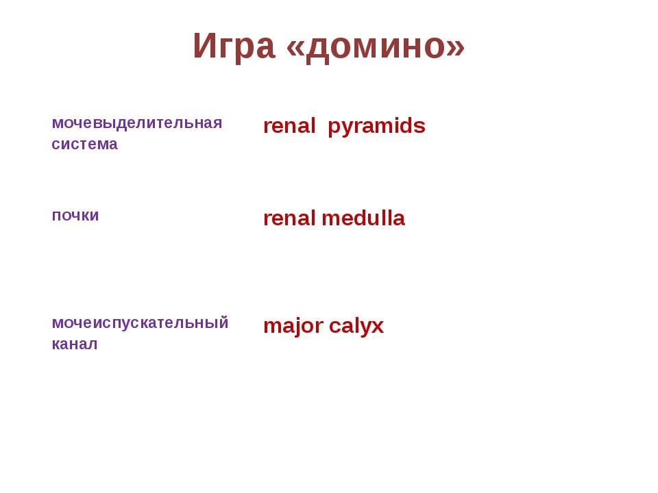 Игра «домино» мочевыделительная система renal pyramids почки renal medulla...