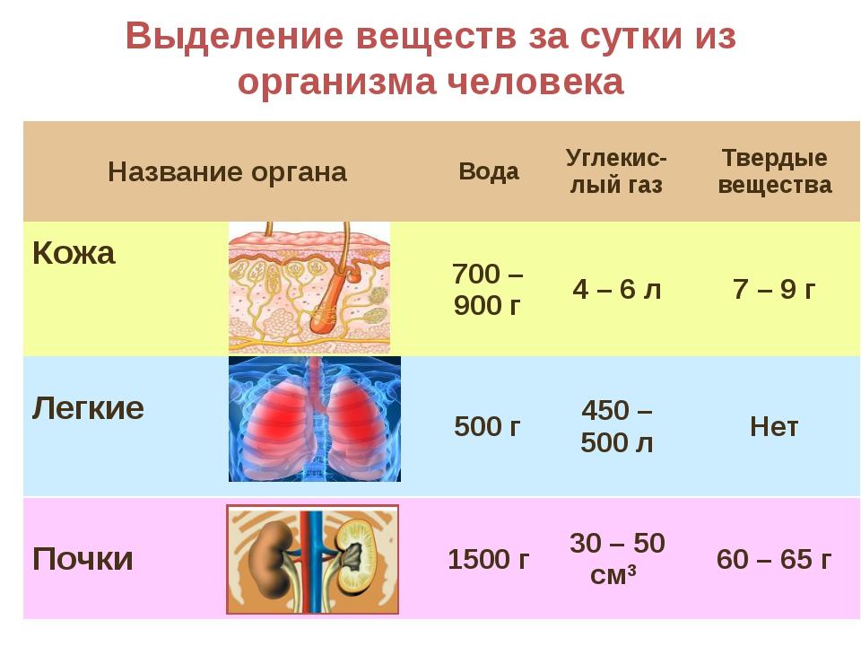 Выделение веществ за сутки из организма человека Название органаВодаУглекис...