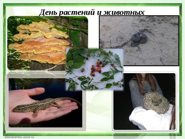 День растений и животных