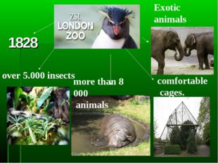 1828 over 5.000 insects more than 8 000 animals Exotic animals comfortable ca