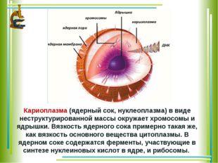 Кариоплазма(ядерный сок, нуклеоплазма) в виде неструктурированной массы окру