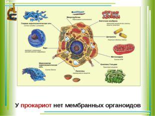 У прокариот нет мембранных органоидов