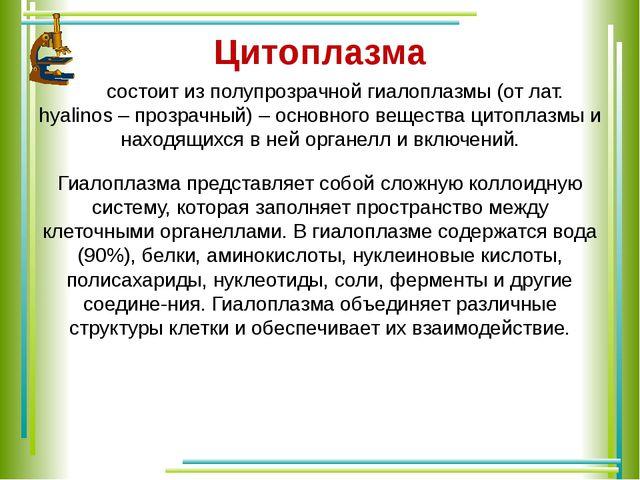 Цитоплазма состоит из полупрозрачной гиалоплазмы (от лат. hyalinos – прозрач...