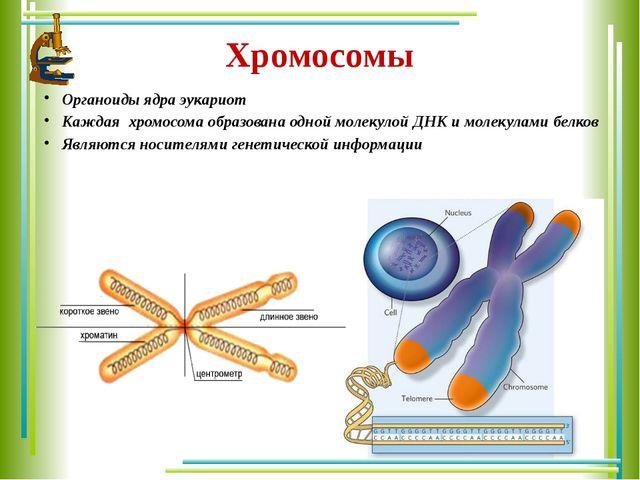 Хромосомы Органоиды ядра эукариот Каждая хромосома образована одной молекулой...