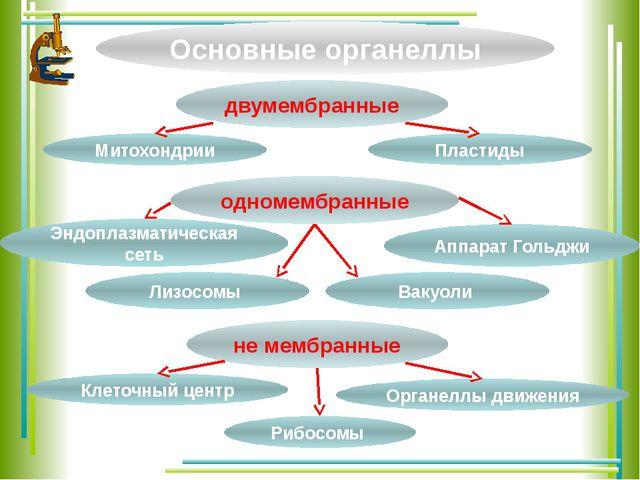 Основные органеллы двумембранные одномембранные не мембранные Митохондрии Орг...
