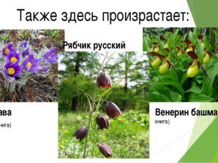Также здесь произрастает: Рябчик русский Венерин башмачок (Красная книга) Сон
