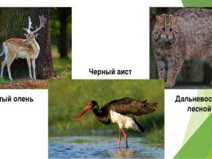 Черный аист Пятнистый олень Дальневосточный лесной кот