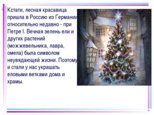 Кстати, лесная красавица пришла в Россию из Германии относительно недавно - п