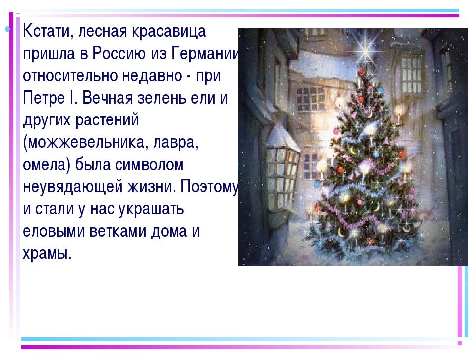 Кстати, лесная красавица пришла в Россию из Германии относительно недавно - п...