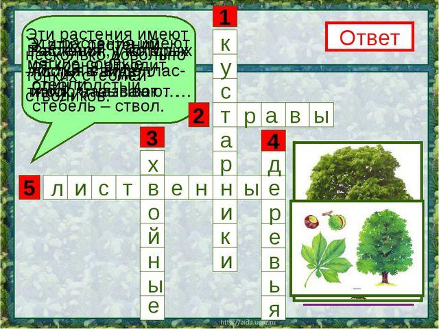 5 3 1 4 2 Эти растения имеют несколько довольно тонких стеблей- стволиков. От...