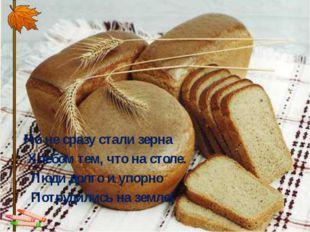 Но не сразу стали зерна Хлебом тем, что на столе. Люди долго и упорно По