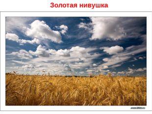 Золотая нивушка