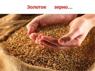 Золотое зерно…