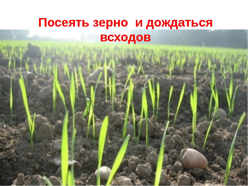 Посеять зерно и дождаться всходов