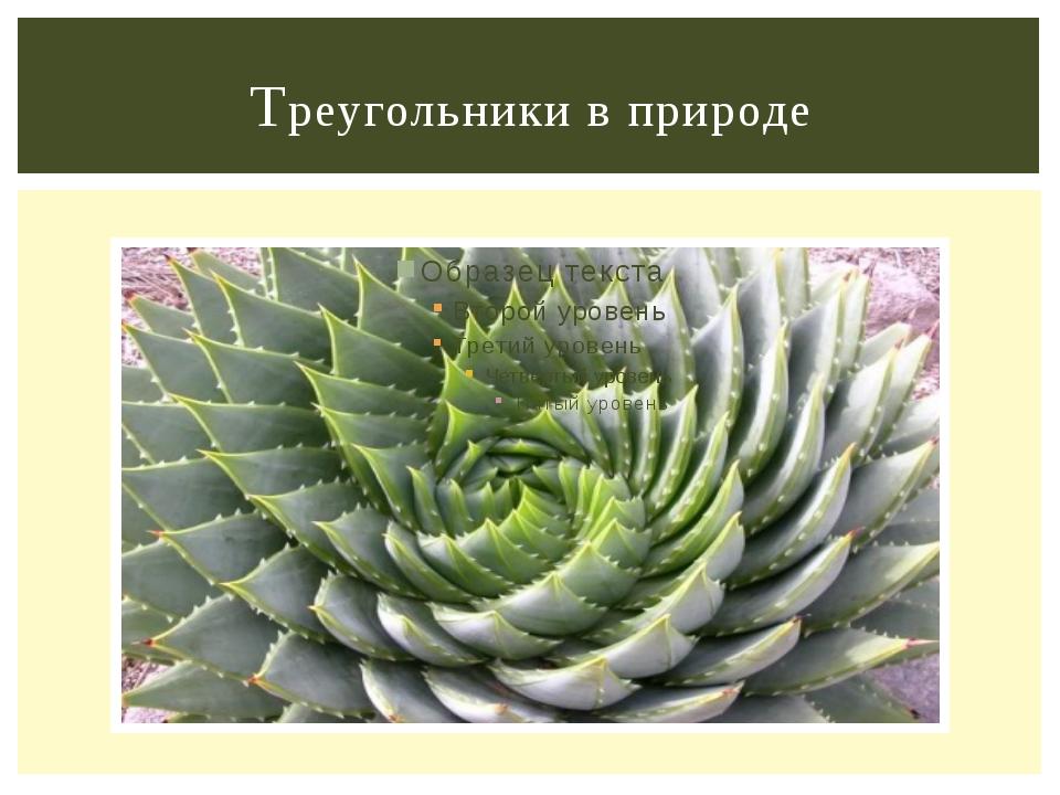 Треугольники в природе