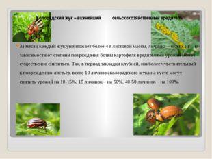 Колорадский жук – важнейший сельскохозяйственный вредитель За месяц каждый ж