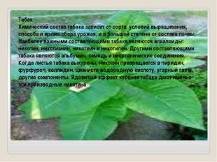 Табак Химический состав табака зависит от сорта, условий выращивания, способ