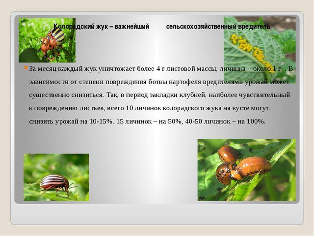 Колорадский жук – важнейший сельскохозяйственный вредитель За месяц каждый ж...