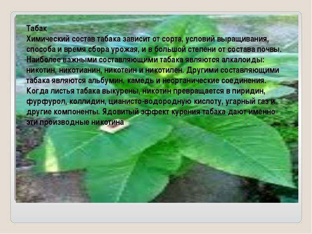 Табак Химический состав табака зависит от сорта, условий выращивания, способ...