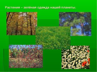 Растения – зелёная одежда нашей планеты.