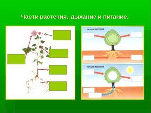Части растения, дыхание и питание.