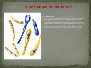 пластиды существуют в трех формах: зеленые хлоропласты, красно-оранжево-желт