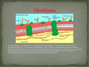 Цитоплазмапредставляет собой сложную коллоидную систему. Ее строение: прозра