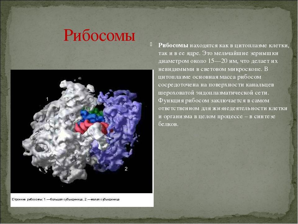 Комплекс Гольджи(рис. 2, 5) сначала был найден только в животных клет...