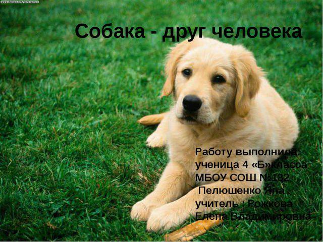 Собака - друг человека Работу выполнила: ученица 4 «Б»класса МБОУ СОШ №182 П...