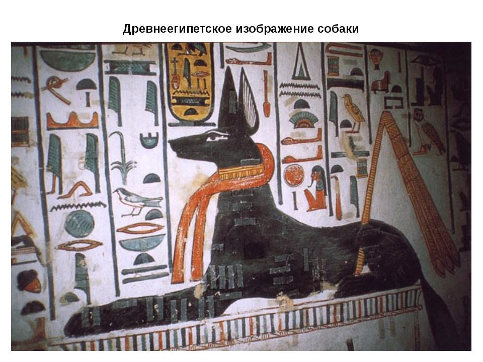 Древнеегипетское изображение собаки