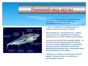 Туловище этой рыбы имеет удлиненную форму, обладающую исключительно высокими