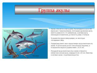 Акулы относятся к классу рыбы. Насчитывается около 460 видов акул. Самая мале