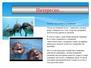 Почему акулы боятся дельфинов? Акулы по большей части – одиночки, которые ред