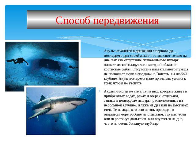 Акулы находятся в движении с первого до последнего дня своей жизни и отдыхают...