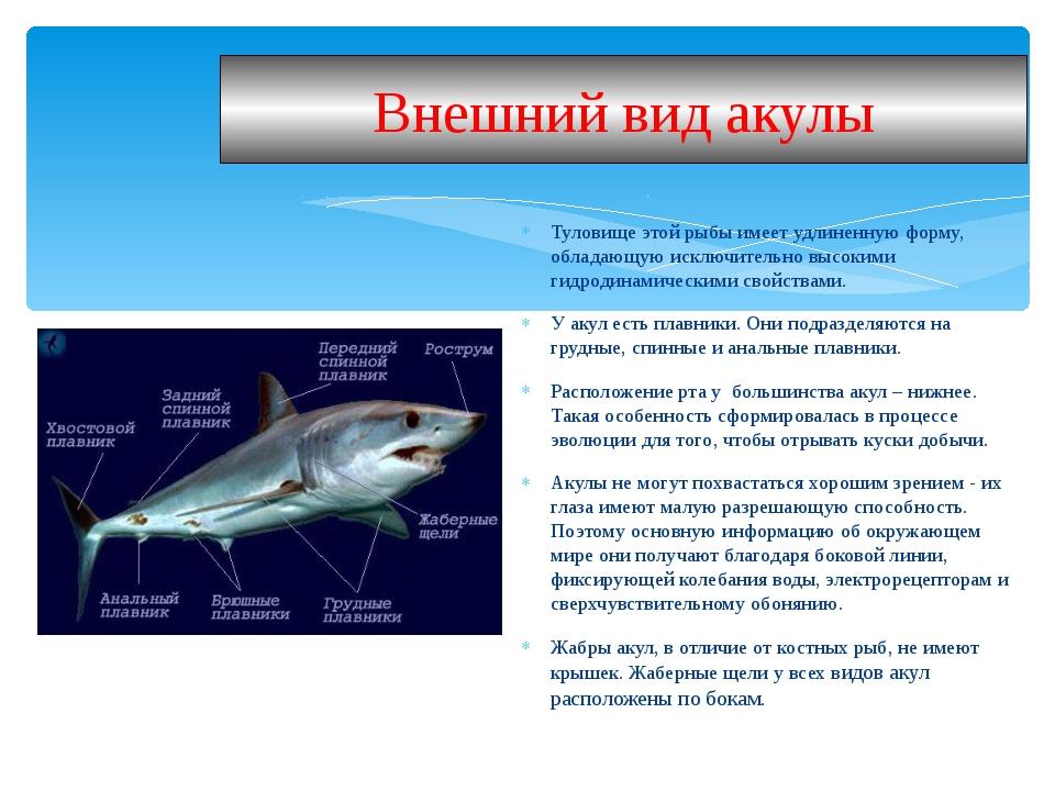 Туловище этой рыбы имеет удлиненную форму, обладающую исключительно высокими...